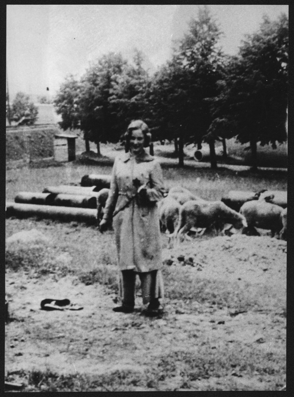 Doris Grozdanovičová, born Schimerlingová, during pasture of the sheep. These were driven to the Terezin Ghetto from burnt village of Lidice, APT 4423