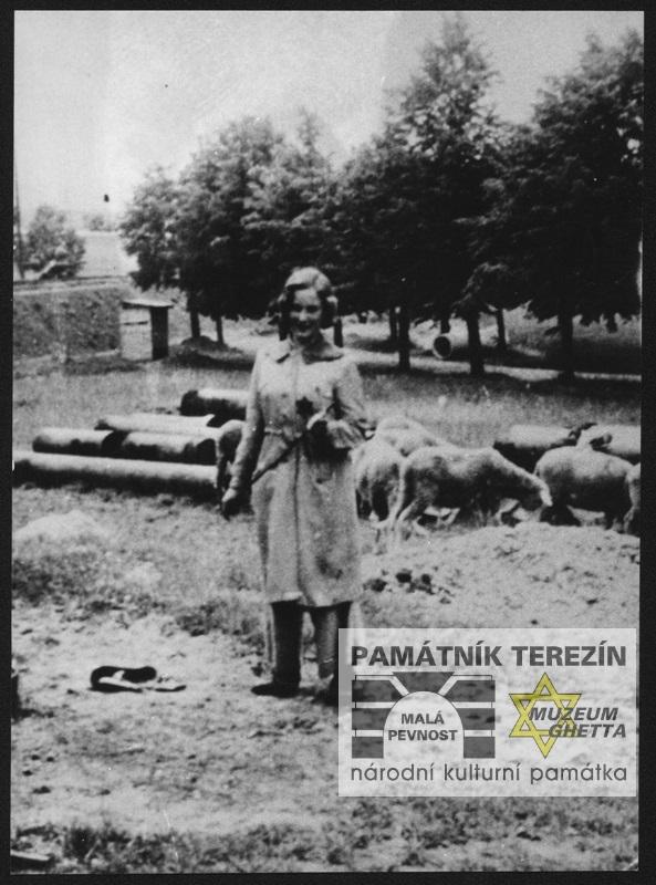 Doris Grozdanovičová, roz. Schimerlingová zachycena při pasení ovcí, které byly do Terezína dovezeny z vypálených Lidic, APT 4423
